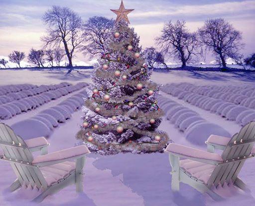 Natale-alla-lavanda-Venzone-UD-Friuli