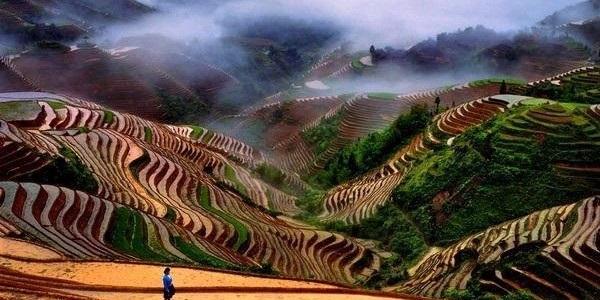 Banaue terrazze di riso