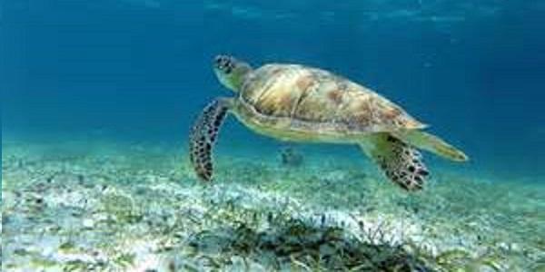 Cay Caulker snorkeling