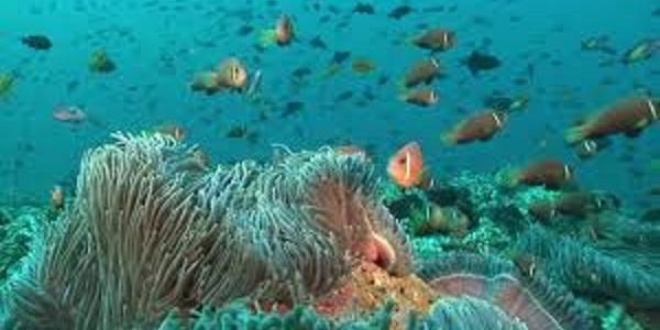 Maldive mondo sottomarino