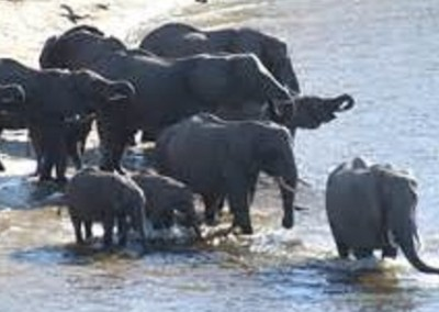 Parco Nazionale dello Zambesi