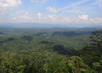 Peradayan Forest Reserve