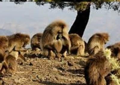 Parco naturale montagne Simien