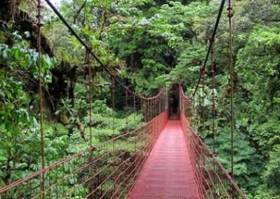 foresta monteverde