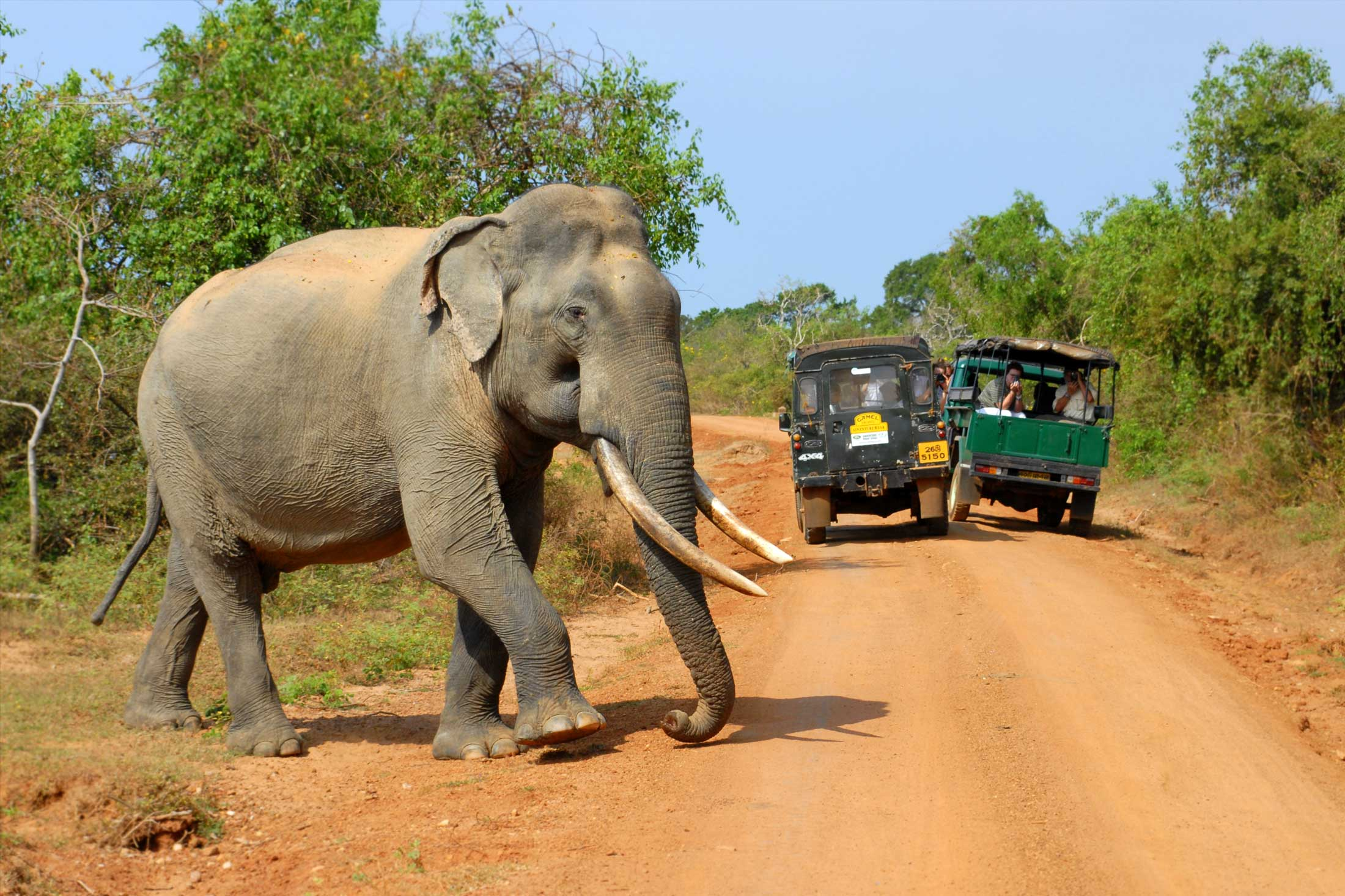 Elephant-Yala-National-Park-Sri-Lanka