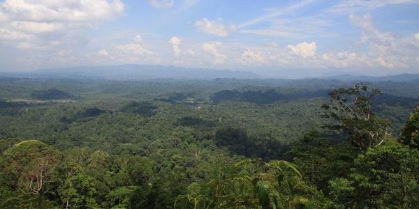 Brunei Peradayan-Forest-Reserve