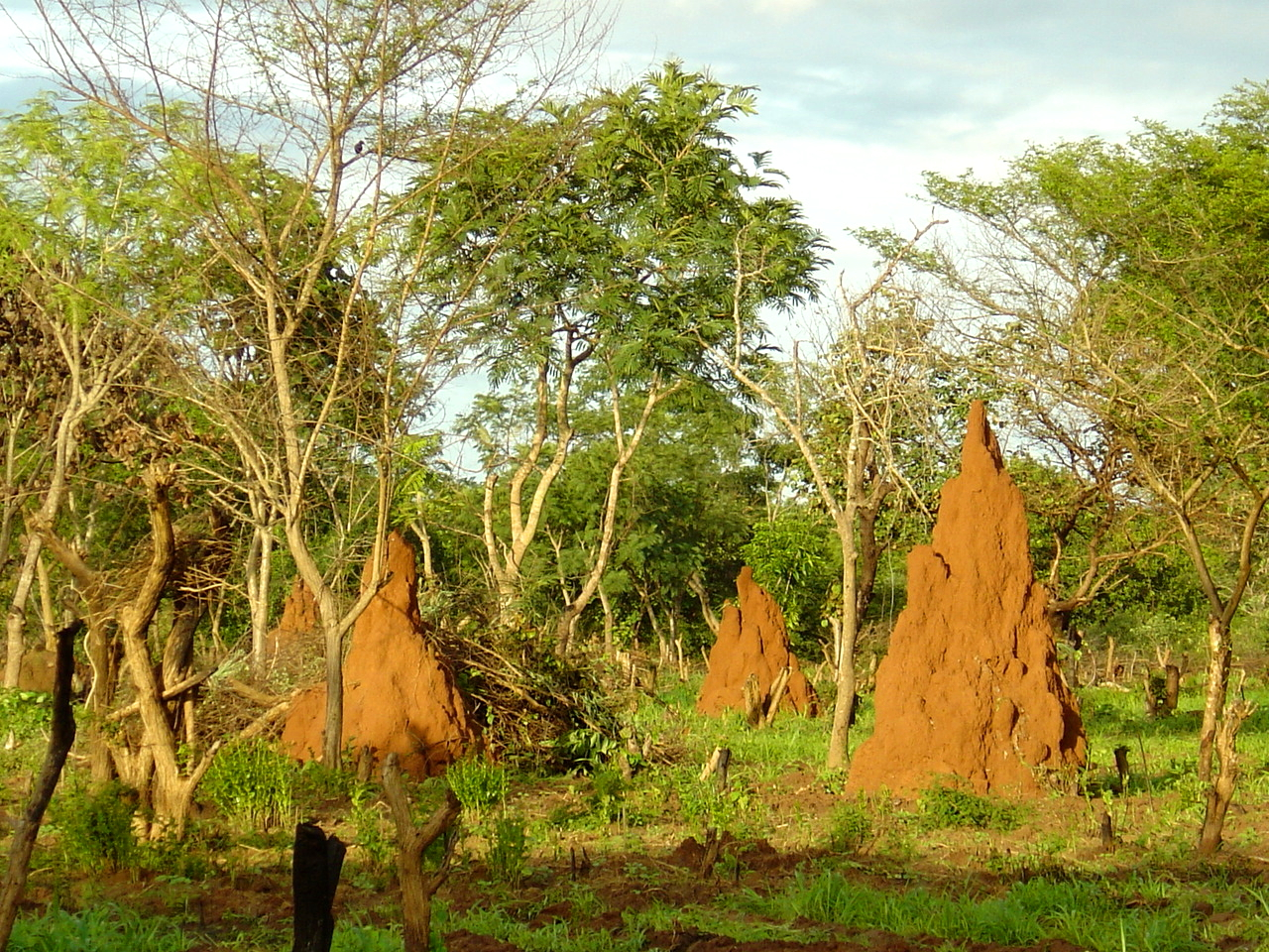Guinea-Bissau Paesaggio_savana