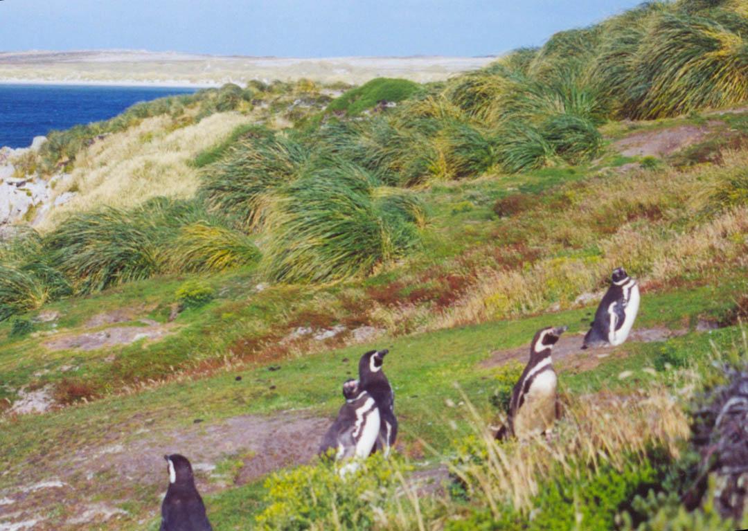 Isole Falkland