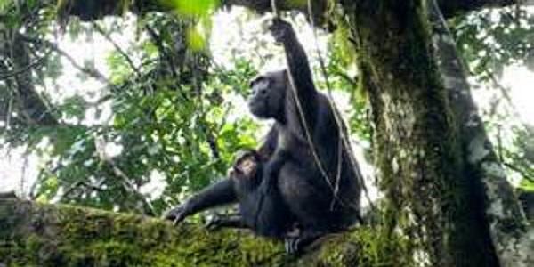 Uganda Kibale-National-Park