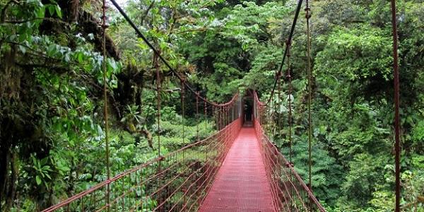 foresta-monteverde